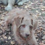 OPREZ: Novo masovno trovanje pasa, monstrumi bacili otrov u naselju Senjak