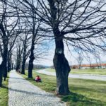 Proleće u Pirotu (foto)