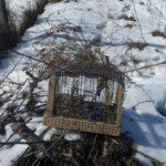 Uhvaćeni krivolovci ptica