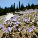 Prolećna čarolija na Staroj planini (foto, video)