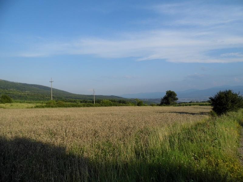 Photo of Proklijalo žito na staroplaninskim njivama!