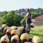Master ekonomista Milica Ćirić čuva vekovnu tradiciju napasajući ovce na Staroj planini