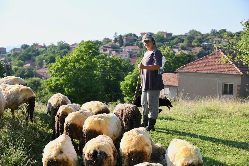 Photo of Master ekonomista Milica Ćirić čuva vekovnu tradiciju napasajući ovce na Staroj planini