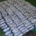 Gradina:Zaplenjeno rekordnih  590 kilograma marihuane!