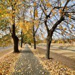 Kej pored Nišave nikad lepši - prava jesenja bajka u centru Pirota