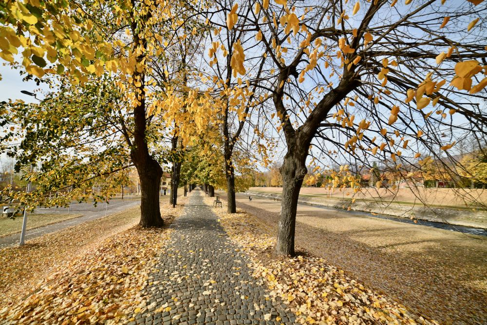 Photo of Kej pored Nišave nikad lepši – prava jesenja bajka u centru Pirota