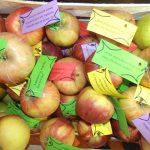 Gimnazijalci ukazali na značaj zdrave ishrane