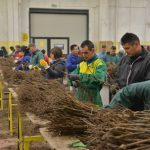 Pirotski poljoprivrednici obišli najvećeg svetskog proizvođača kalemova vinove loze u Italiji