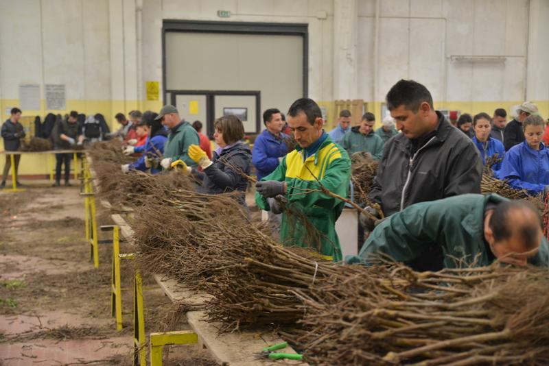 Photo of Pirotski poljoprivrednici obišli najvećeg svetskog proizvođača kalemova vinove loze u Italiji