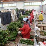 Poljoprivrednici posetili jedan od najvećih rasadnika jabuka u Italiji - Vivai Salvi