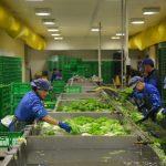 Organska poljoprivredna proizvodnja u Italiji. Pirotski poljoprivrednici nastavljaju posetu Italiji
