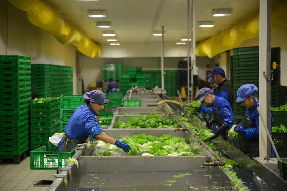 Photo of Organska poljoprivredna proizvodnja u Italiji. Pirotski poljoprivrednici nastavljaju posetu Italiji