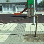 Još jedan vandalski čin! Polomljeno stablo kod Omladinskog stadiona