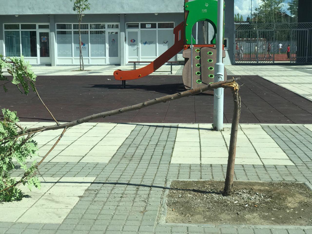 Photo of Još jedan vandalski čin! Polomljeno stablo kod Omladinskog stadiona