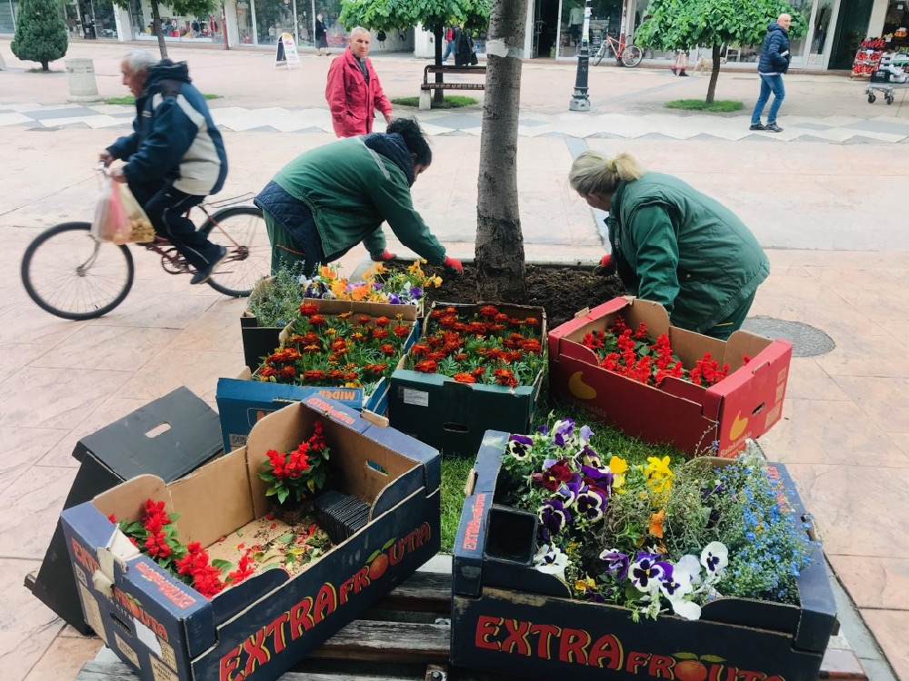 Photo of Komunalac: Više od 50.000 sadnica cveća za lepši grad