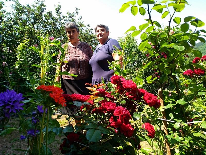 Photo of Pirotsko selo Temska raj za oči: Vrt od 1200 ruža krasi Veliku stranu