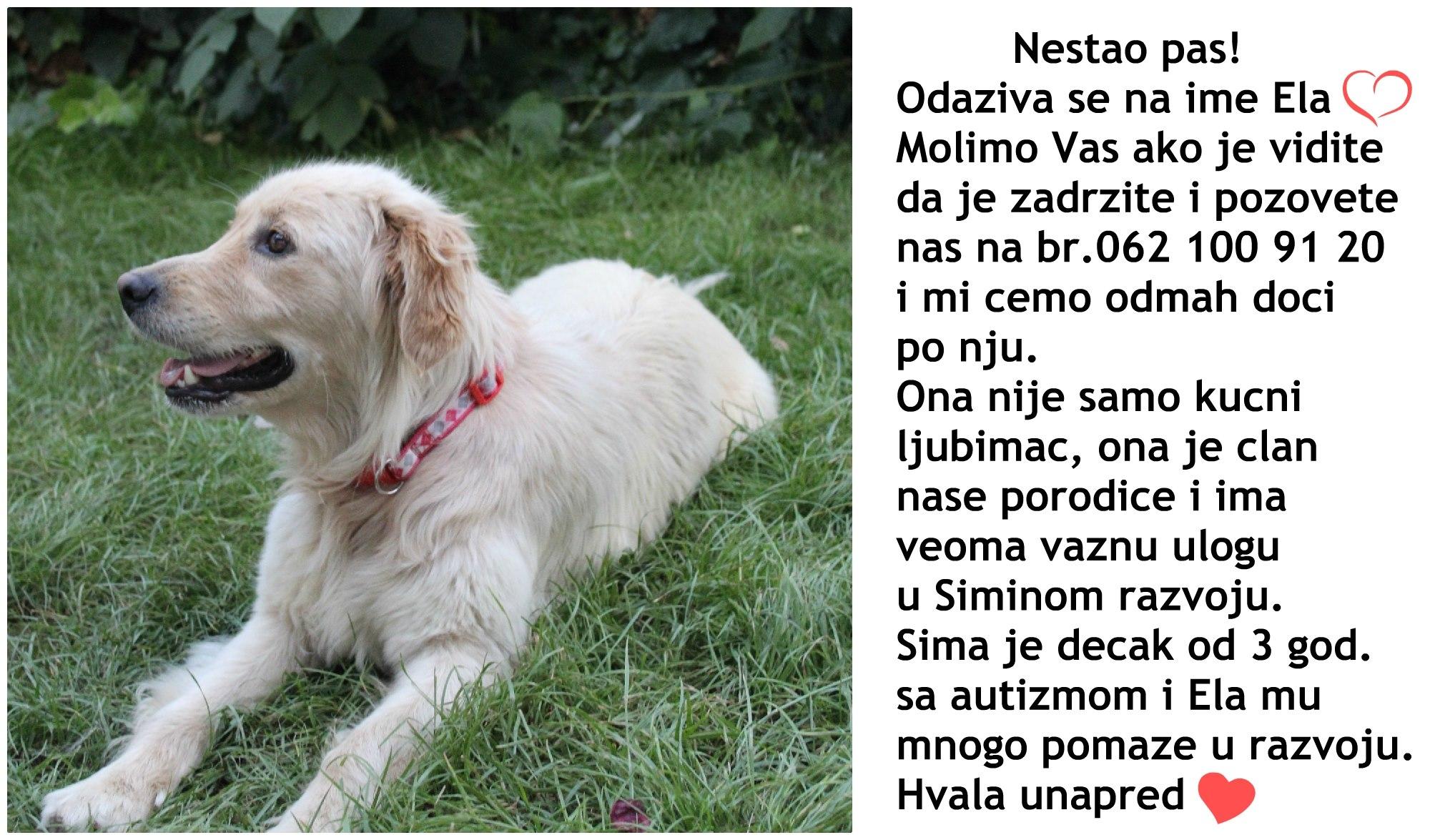 Photo of Da li ste videli ovog psa? Nestao je,  a pomaže našem malom sugrađaninu sa autizomom!