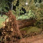 Vetar nosio krovove, obarao stabla, na svu sreću nema povređenih. Nadležne službe odmah reagovale