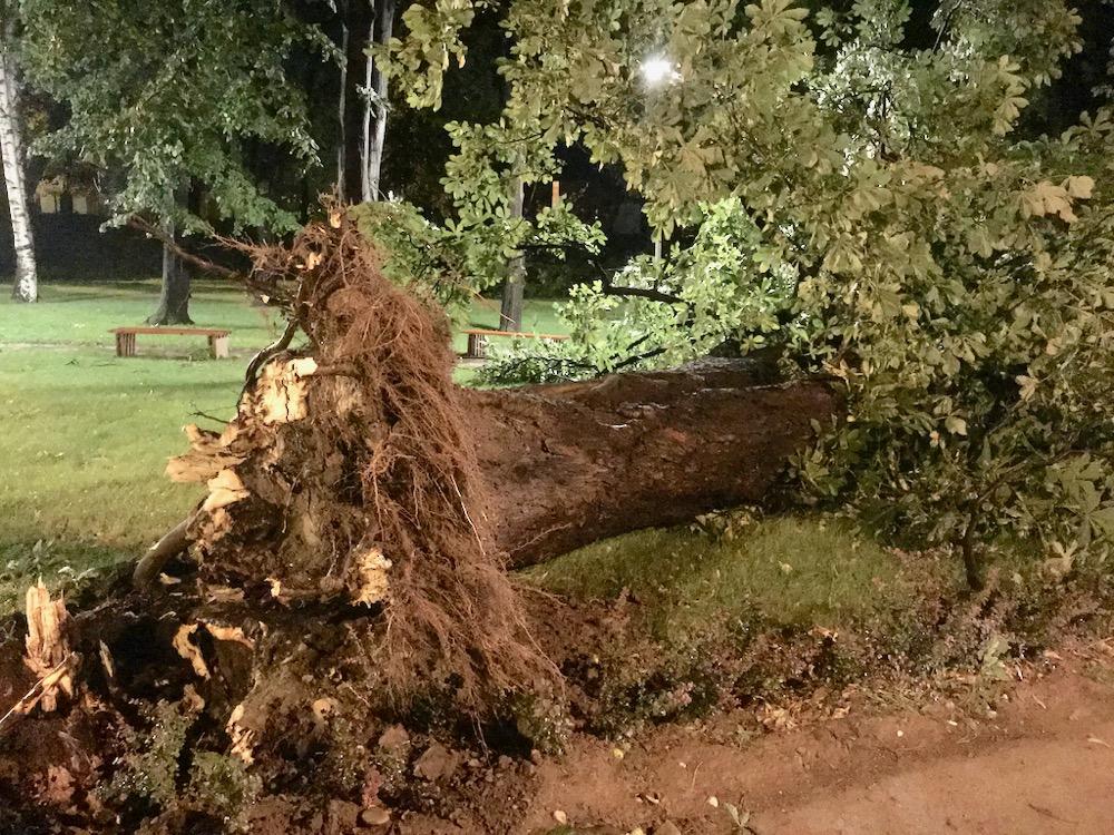 Photo of Vetar nosio krovove, obarao stabla, na svu sreću nema povređenih. Nadležne službe odmah reagovale