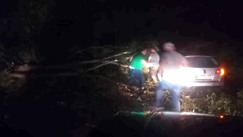 Photo of Alarmantno nevreme na putu ka Barje Čifliku, vetar obarao drveće, put trenutno neprohodan