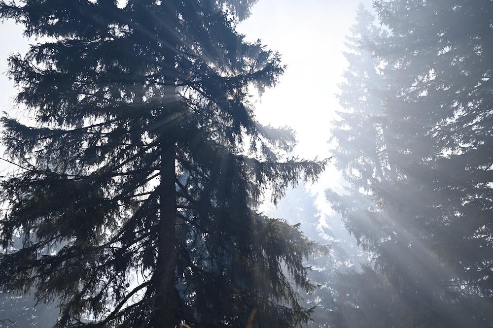 Photo of Predrag Marić sutra obilazi požarom zahvaćene delove Stare planine!