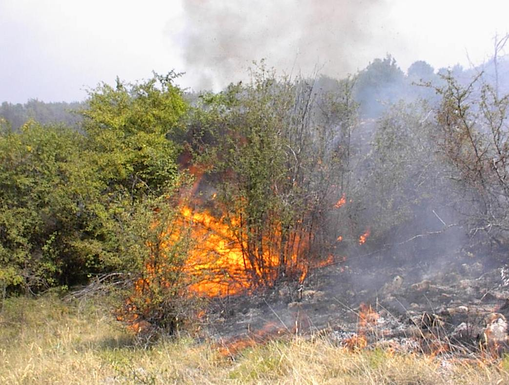 Photo of Na Staroj planini još uvek gori