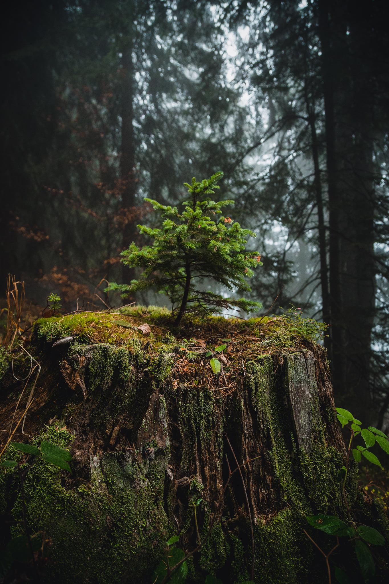 """Photo of Život uvek nađe svoj put – neverovatan prizor sa """"ranjene"""" Stare planine"""