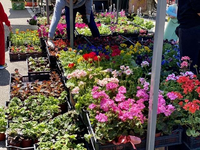 Photo of Pirotska pijaca okupana šarenilom cveća