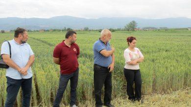 Photo of Dan polja strnih žita