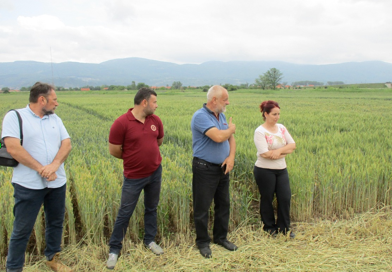 dani polja poljoprivredna stručna služba pirot