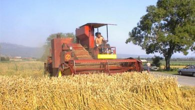 Photo of Prinos žita u Pirotskom polju oko 4 tone po hektaru