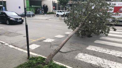 Photo of Vetar oborio stablo u centru grada