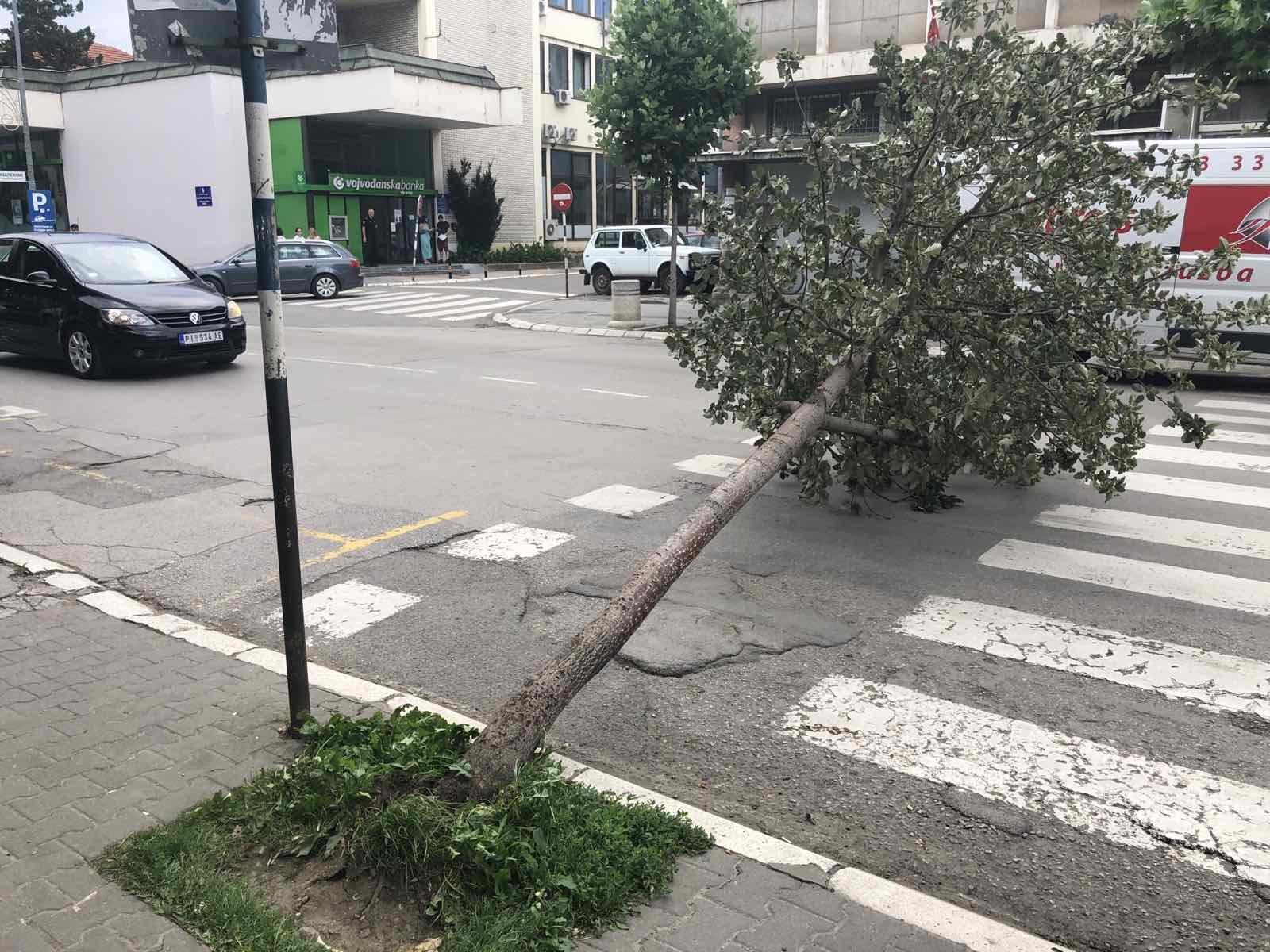 vetar oborio stablo u pirotu
