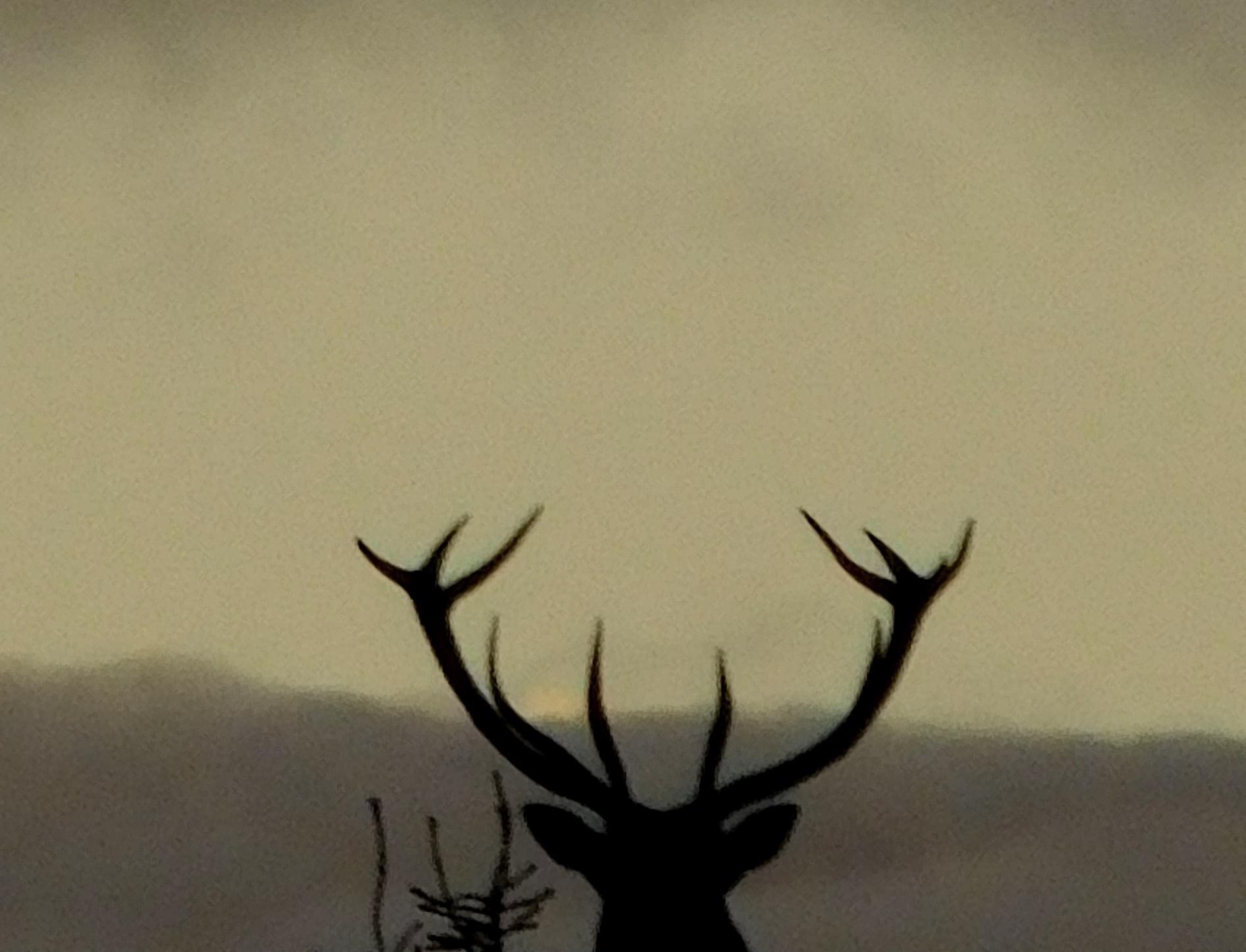Jelen na Staroj planini