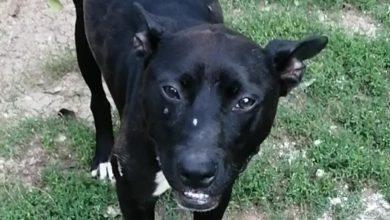 Photo of Naša sugrađanka pronašla i privremeno udomila povređenog psa. Molba vlasnicima, ako ih ima, da se jave i preuzmu psa