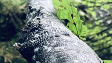 Photo of Svetski dan šuma – Trećina domaćinstava u Srbiji se greje na drva.