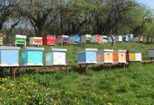 Photo of Miloš Rančić: Imali smo tri katastrofalne godine, nadam se da će ova biti bolja za pčelare