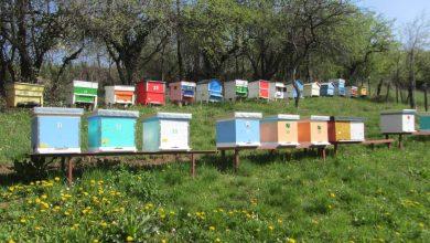 Photo of Pčelarstvo u razvoju, trenutno registrovano više od 420 pčelinjaka