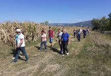 Photo of Izuzetan rod kukuruza, prinosi i do 10 tona po hektaru