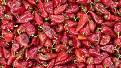 Photo of Ponuda na Zelenoj pijaci bogatija nego ikada. Sezona zimnica uveliko u toku a potražnja za kvalitetnom paprikom, paradajzom, kupusom ogromna