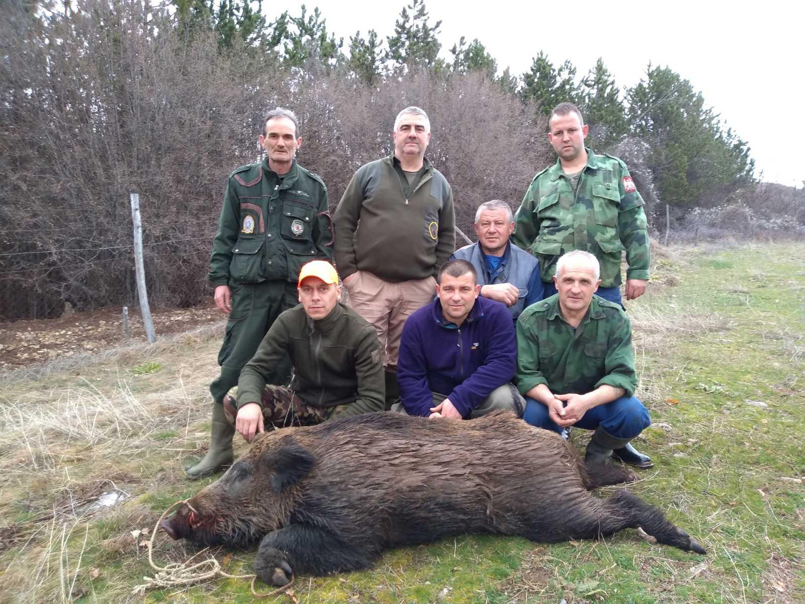 lovci divlja svinja ulov stara planina