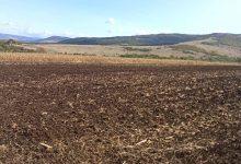Photo of Setva pšenice u punom jeku, uslovi veoma povoljni