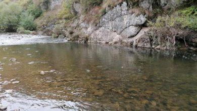 Photo of Poribljavanje parka prirode Stara planina: Pušteno 28.000 primeraka pastrmke