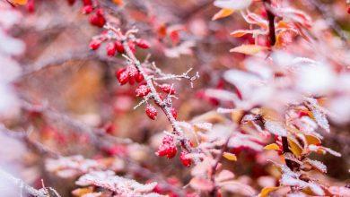 Photo of Zimska bajka na Planinarskom domu (FOTO)