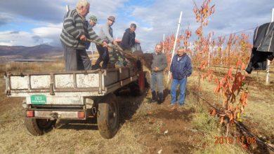 Photo of Idealni uslovi za jesenje, osnovno đubrenje voćaka
