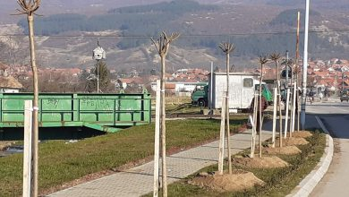 Photo of Počela planirana sadnja stabala u gradu