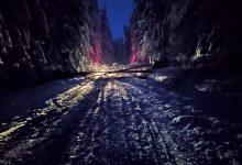 Photo of Velika stabla bora preprečila put ka Rsovcima. Trebutno saobraćaj u prekidu