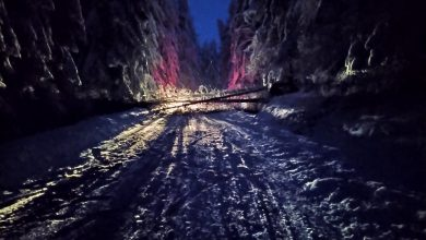 Photo of Velika stabla bora preprečila put ka Rsovcima. Saobraćaj trenutno u prekidu