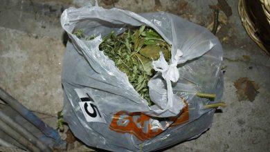 Photo of Pirotska policija: Hapšenje zbog uzgajanja marihuane, zaplenjena improvizovana laboratorija za uzgoj marihuane u veštačkim uslovima