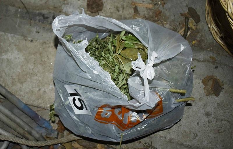 marihuana pirot policija zaplena